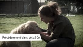 Véto & Co : Emission 10