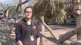Expédition Pairi Daiza : 5 -  Les rhinocéros adorent les caresses