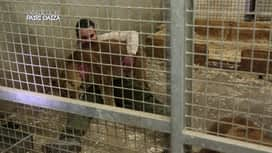 Expédition Pairi Daiza : 6 - Un bébé lémurien fait ses premiers pas