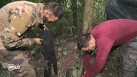 Wild, la course de survie : Nicolas et Emmanuel sont attaqués par des fourmis !