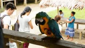 Enquête exclusive : Tourisme de luxe et narcotrafic : le nouveau visage de l'Amazonie