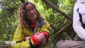 The Island : Les célébrités souffrent des piqûres