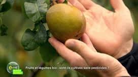 E = M6 spécial Nutrition : Fruits et légumes bio: sont-ils cultivés sans pesticides ?