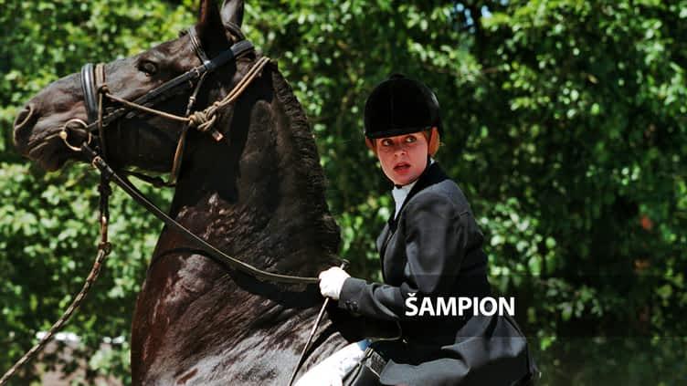 Šampion