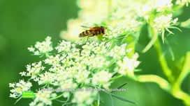 E = M6 spécial Nutrition : Les insectes utiles, des alliés de nos cultures !
