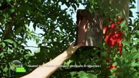E = M6 spécial Nutrition : Quand des odeurs protègent nos fruits et légumes !