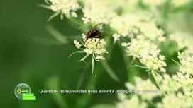 E = M6 spécial Nutrition : Quand de bons insectes nous aident à protéger nos cultures !