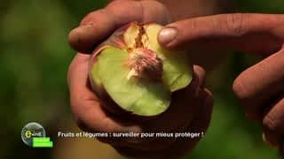 Fruits et légumes : surveiller pour mieux protéger !