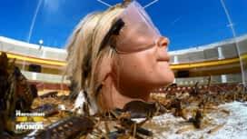 Les Marseillais vs le Reste du monde : Laura et Carla : le duel de tous les insectes !