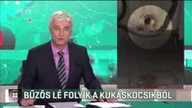 Híradó : RTL Híradó 2019-01-17