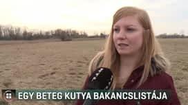 Híradó : RTL Híradó 2019-03-03
