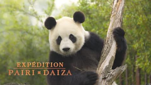 Expédition Pairi Daiza en replay