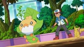 Pokémon : Un combat pour l'amour des types insecte !