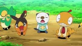 Pokémon : Baggiguane et la capricieuse Scrutella !