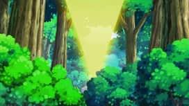 Pokémon : La lumière du ranch d'Amaillide !