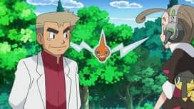 Pokémon : Le rêve continue !