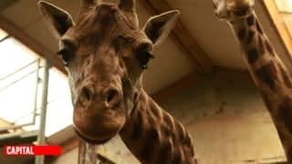 Zoos, parcs d'attractions : grands spectacles et grosses dépenses !