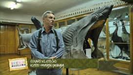 Šetnja muzejima : Epizoda 8