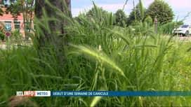 RTL INFO 19H : La saison du pollen de graminées a débuté