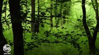 Villages Nature : les tropiques aux portes de Paris !
