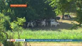 RTL INFO 19H : Sécheresse: une situation normale pour le centre de crise wallon