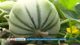 RTL INFO 13H : Des agriculteurs wallons se lancent dans la culture du melon