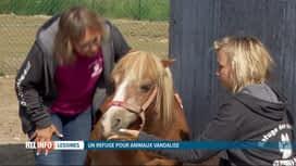 RTL INFO 13H : Un refuge pour animaux de Lessines a été vandalisé