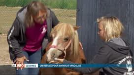 RTL INFO 19H : Un refuge pour animaux de Lessines a été vandalisé