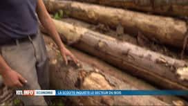 RTL INFO 19H : Les scolytes attaquent nos arbres, les scieries sont dépassées