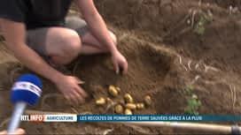 RTL INFO 13H : Les cultures de pommes de terre sont sauvées grâce à la pluie