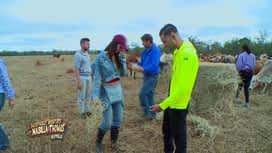 Les aventures de Nabilla et Thomas en Australie : Ils doivent ramasser les crottes des animaux