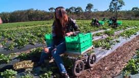 Les aventures de Nabilla et Thomas en Australie : Il faut cueillir les fraises, pas les manger Nabilla