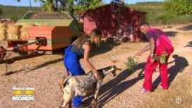 Les Marseillais vs le Reste du monde : Elles les ont rendus chèvre !