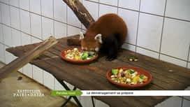 Expédition Pairi Daiza : 2 - Les pandas roux déménagent