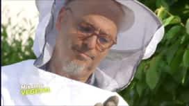 Mission : Végétal : Downtown abeilles
