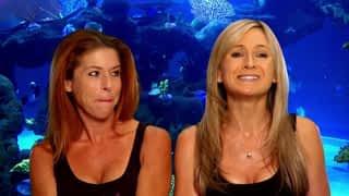 Aquamen : les as des aquariums : L'aquarium de David Hasselhoff