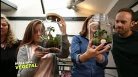 Mission : Végétal : Esprit terrarium