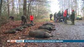 RTL INFO 13H : Les chasseurs devront tirer un nombre minimum de sangliers