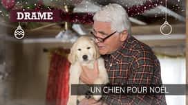 Un chien pour Noël en replay