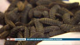 RTL INFO 13H : Des insectes pour nourrir les animaux ?