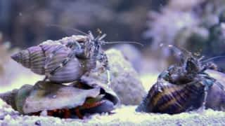 Aquamen : les as des aquariums : Une bonne dose d'ATM