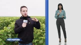 Le vin au 21ème siècle