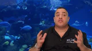 L'aquarium de Wilmer