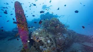 Les îles Salomon (de Munda à Gizo)