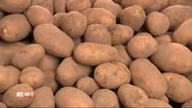 RTL INFO 19H : Le prix des pommes de terre pourrait grimper dès le mois d'octobre