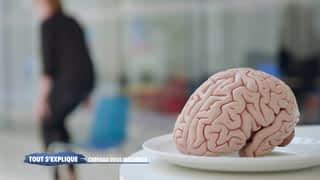 Bien nourrir son cerveau