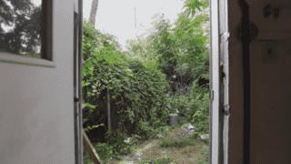La petite maison dans la jungle