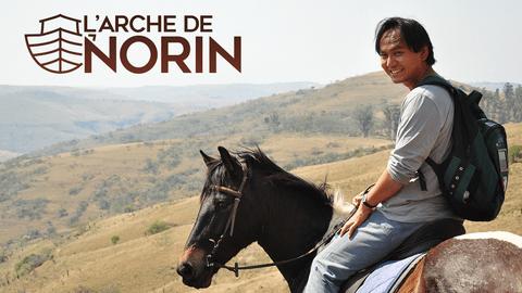 L'arche de Norin