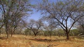 L'arche de Norin : Urgence dans la savane