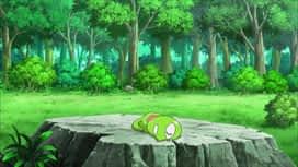 Pokemon : S19E02 Un amoureux pour Evoli !